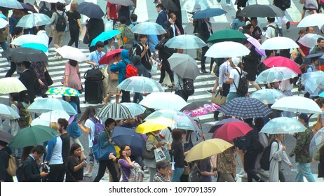 SHIBUYA,  TOKYO,  JAPAN - CIRCA MAY 2018 : Scenery of SHIBUYA around big scramble crossing in RAIN.
