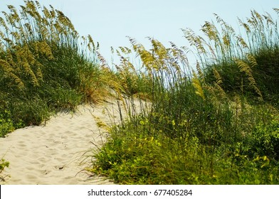 Shifting Sand Dunes of the Outer Banks of North Carolina