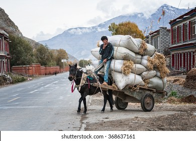 SHIGATSE - MAY 23: Tibetan farmer transporting hay on May 23, 2014 in Shigatse, Tibet. Many areas in Tibet are still categorized as poor where farmers earn around $1200 annual.