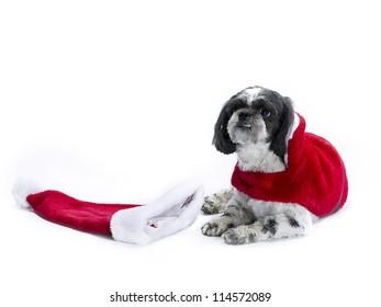 Poo Costume Images Stock Photos Vectors Shutterstock