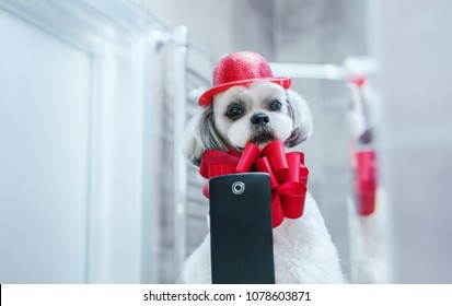 Shih tzu dog looking at mirror and making selfie. Photo after grooming with red fashion accessories.
