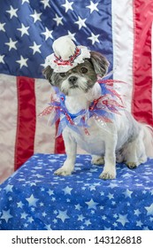 A shih tzu dog wearing a Betsy Ross bonnet poses in front of an American flag