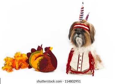 A Shih Tzu, dressed in an Indian chest plate with a head band and feathers, sits beside a stuffed turkey.