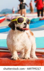 Shih tzu, Poodle mix dog wearing sunglasses, standing on red canoe.
