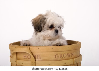 Shih tzu puppy looking out from a wooden basket that says home grown on the side.