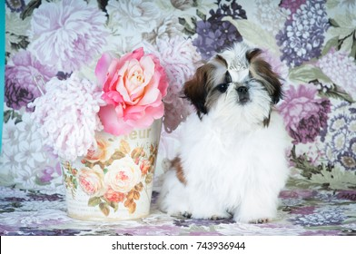 Shih tzu puppy portrait at studio on flowered background