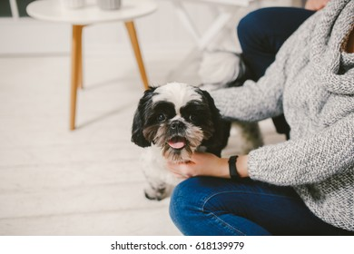 Shih Tzu sitting with people, a dog and a family, hands hugging a dog