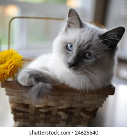 Shii-chen found a comfy basket to hang out in (the photographer found the flower).