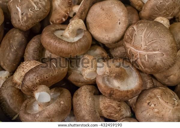 Shiitake mushroom background and texture