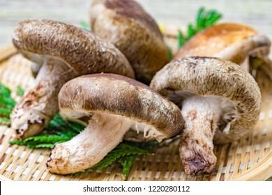 shiitake mushroom on bamboo colander