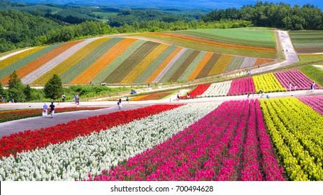 Shikisai-no-oka Farm, Hokkaido, Japan