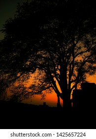 Shilhouette tree during subset, golden hour