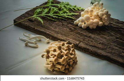 Shimeji the edible mushroom on the wood and white table cloth