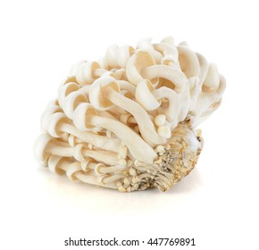 Shimeji mushroom isolated on white background