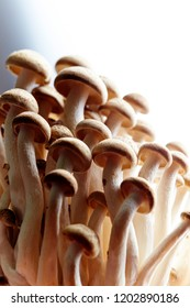 Shimeji mushroom on white background