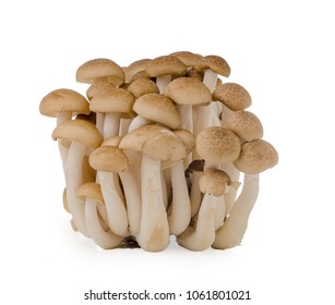 shimeji mushrooms brown varieties isolated on white background.