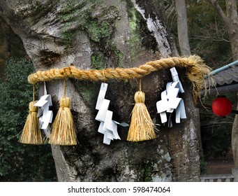 A shimenawa (Shinto rope decoration) around a tree outside Himure Hachiman Shrine, Omi-Hachiman, Japan