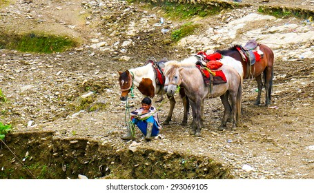 Shimla, India; 10th Aug 2013: Young boy waiting with his horses for tourists to come and take a ride. This is a common thing in shimla, kufri and other hill stations