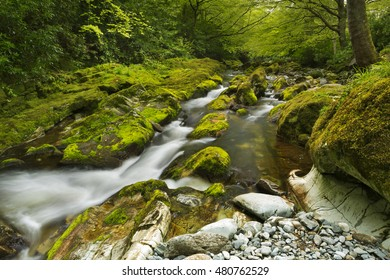The Shimna River in Tollymore Forest Park in Northern Ireland.