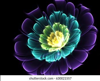 Shine Flower Background   - Fractal Art