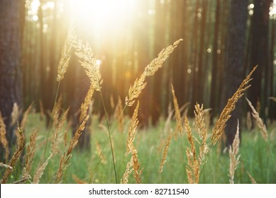 shine sunlight through trees with Bromus in the forest