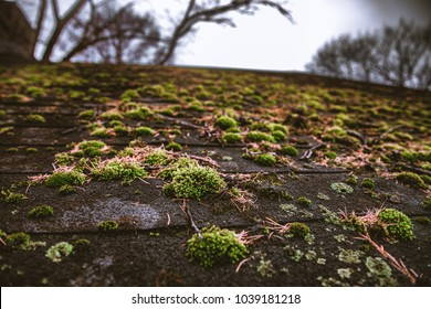 Shingle Roof Covered in Moss