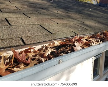 shingles and gutter with dry, brown leaves and black gutter guard pipe cleaner