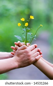 Shining beautiful buttercup in male and female hands