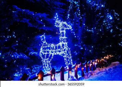 Shining deer of blue lights. Christmas lights