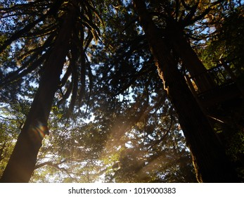 Shining forest yakushima