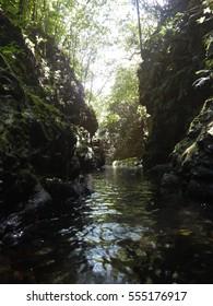 Shining forest Yakushima, kagoshima prefecture, japan