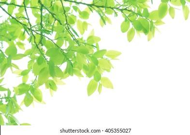 Shining Fresh Green Leaves Close Up