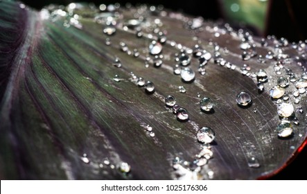 Shining raindrops on a leaf