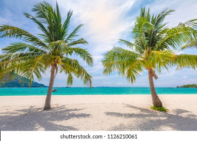 Shining sun and blue sky on nice beach with palm trees.