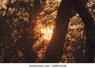 shining through the Woods