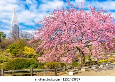Shinjuku, Japan gardens in the spring season.