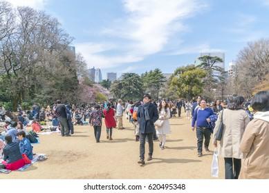 Shinjuku, Tokyo, Japan - April 02, 2017: Shinjuku Gyoen National Park during early cherry blossom (sakura hanami). It is one of the most famous place to view sakura flower