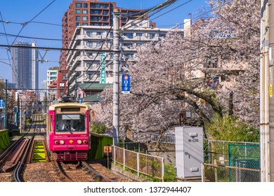 """SHINJUKU, TOKYO / JAPAN - APRIL 5 2019 : A vehicle of the """"Toden Arakawa Line"""" (Tokyo Sakura Tram) that runs in a city where cherry blossoms bloom. It is the best route for a peaceful Tokyo walk."""