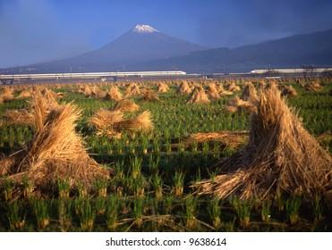 A Shinkansen runs between Mt. Fuji and a rice field