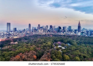 Shinto shrine Meiji-Jingu in central Tokyo near Shinjuku business district at sunrise in elevated aerial view over green park and garden towards cityscape.