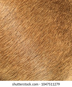 Shiny brown animal fur
