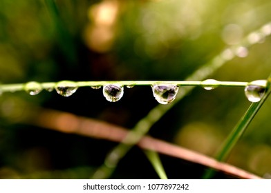 Shiny drops of morning dew. Green macro photo.