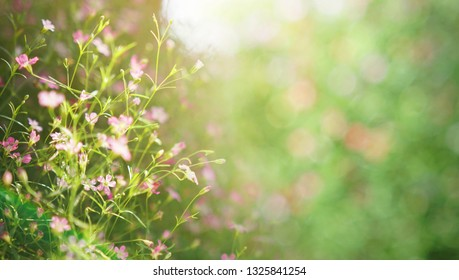 Shiny flower background. Blooming on meadow