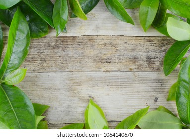 Shiny green leaves create a border over a rustic wooden background for Earth Day in April. Copy space
