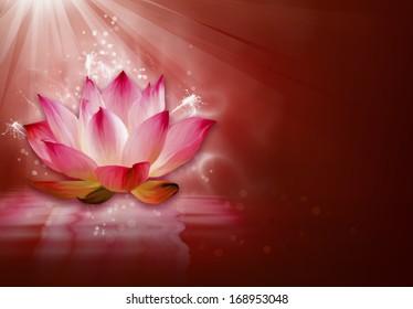 Shiny lotus at the water
