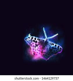Shiny neon butterfly dark background