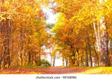 Shiny Outdoor Yellow Trees