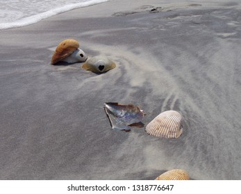 ship island seashells