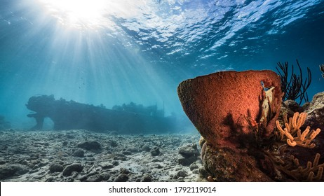 """Ship wreck """"Tugboat"""" in  shallow water of coral reef in Caribbean sea with big Sponge and view to surface and sunbeams"""