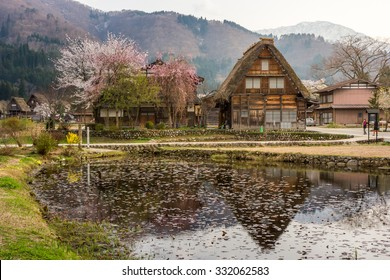 Shirakawa Go (Shirakawa-go) Beautiful Reflection of The Historic Village and Cherry Blossom Sakura in Spring Season. Shirakawago Traditional Houses in the Gassho Zukuri Style, Gifu, Japan